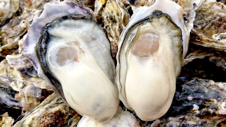 美味しい牡蠣がいつでも食べれる。宮城県産牡蠣の出荷基地~和がき~